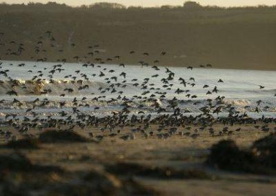 Sortie de découverte des oiseaux
