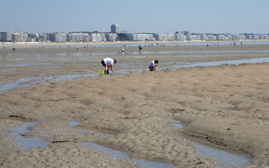 Pêche à pied : VivArmor Nature forme les acteurs de la Loire-Atlantique