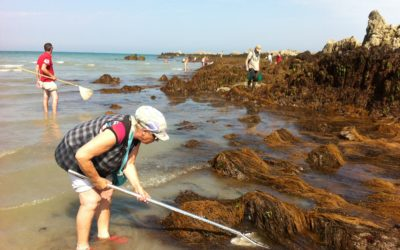 Pêche à pied : lancement d'un observatoire en Manche – Mer du Nord