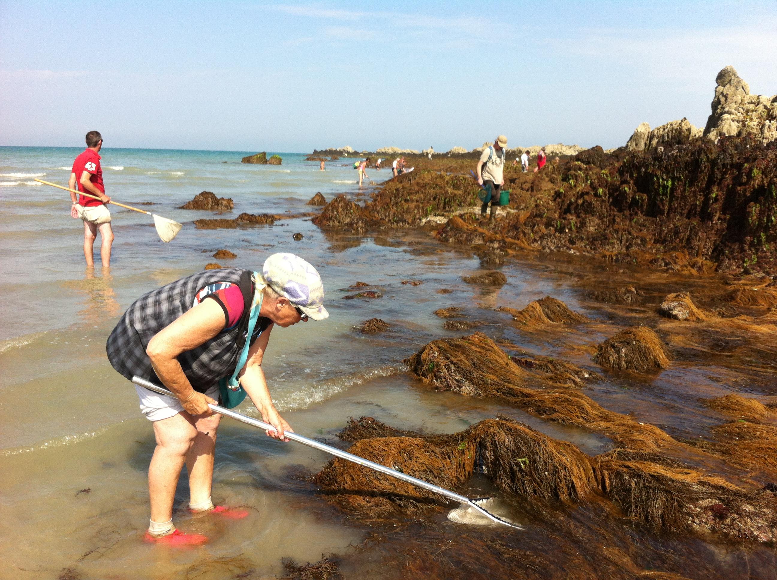 Sensibilisation et enquête auprès des pêcheurs à pied à Martin-Plage