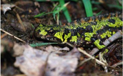 Réunion publique concernant la protection des amphibiens sur la RD 28 au niveau des Landes de la Poterie