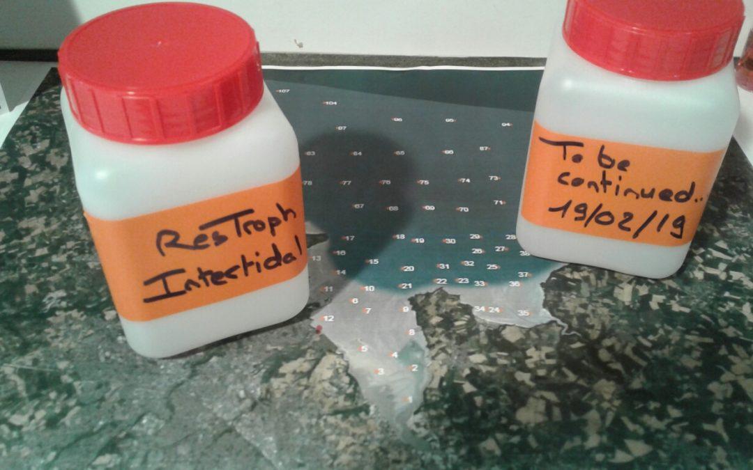 ResTroph – Préparation du terrain intertidal