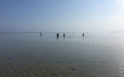 Grandes marées de mars : bilan de la sensibilisation des pêcheurs à pied
