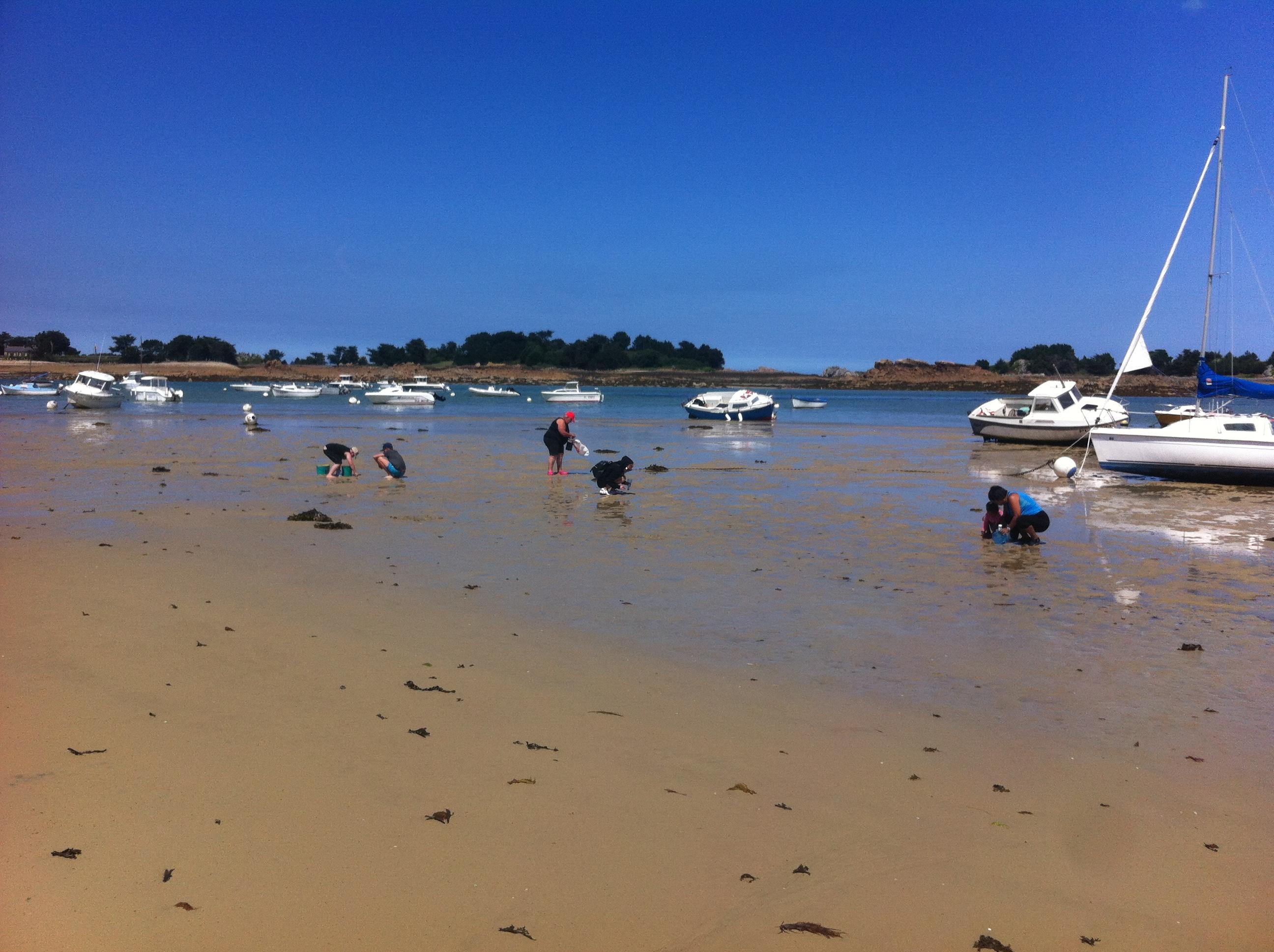 Sensibilisation des pêcheurs à pied à Penvénan