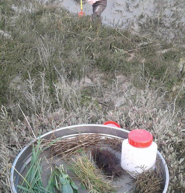 Prélèvements trophiques en intertidal #Restroph
