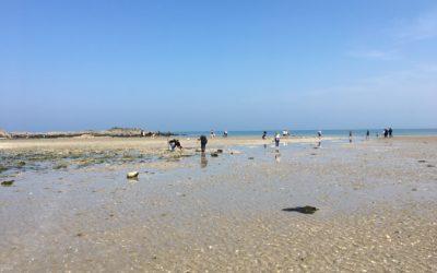 Grandes marées d'avril : bilan de la sensibilisation des pêcheurs à pied