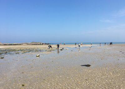 Pêcheurs de palourdes à Martin-Plage