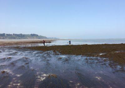 Pêcheurs de moules aux Godelins