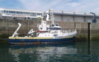 Quelle fonction de nourricerie pour les poissons du fond de baie de Saint-Brieuc? #ResTroph