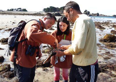 Mesure et marquage d'un homard