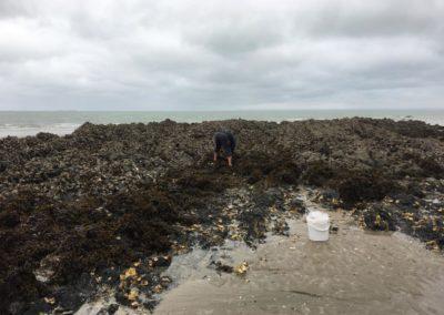 Pêcheur d'huîtres aux Godelins