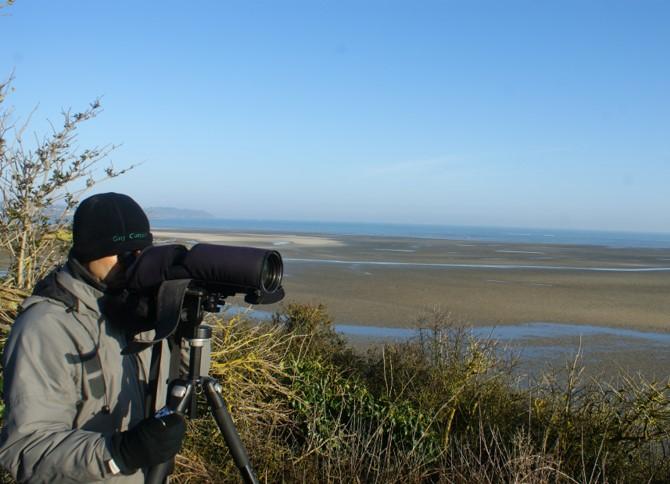 Comptage ornithologique en baie de Saint-Brieuc