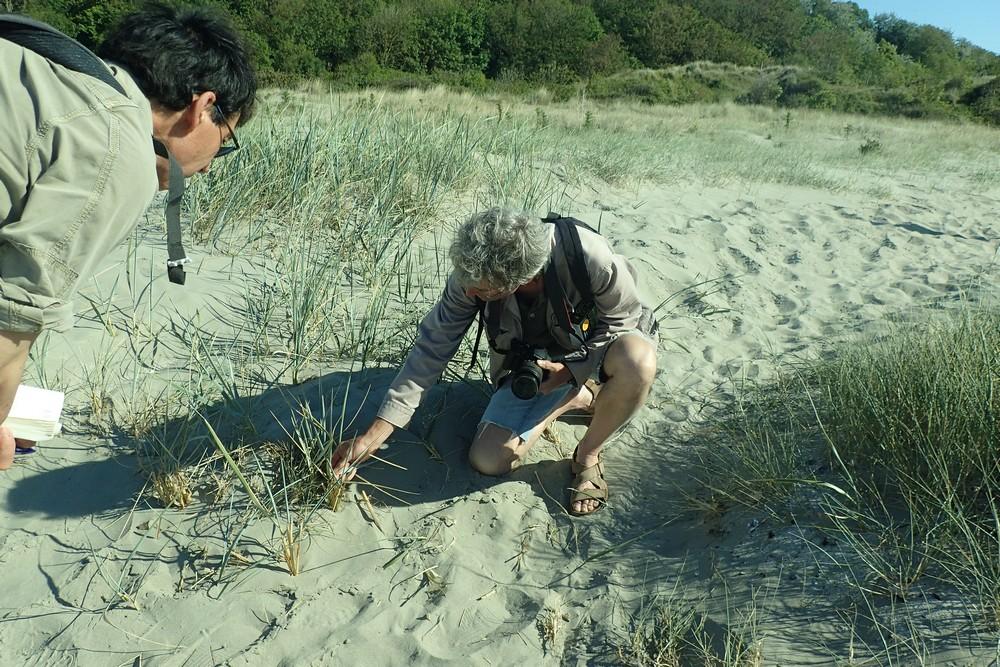 Sortie botanique aux dunes de Bon Abri !