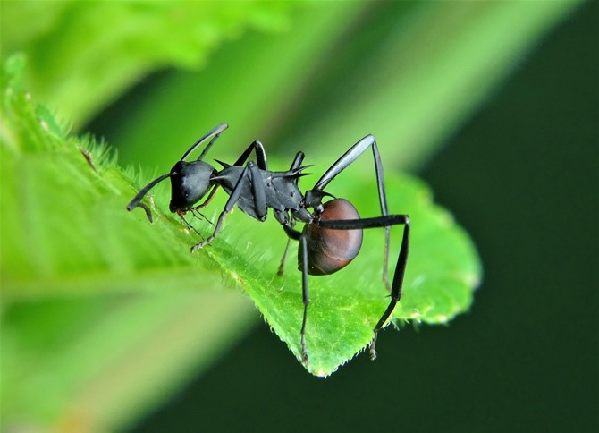 Paroles de fourmis