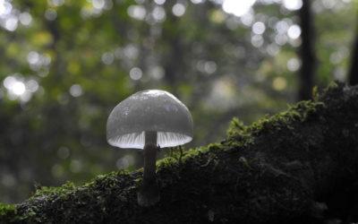 Retour en images sur la sortie à Plédéliac «A l'automne, la forêt se prépare doucement à l'hiver»