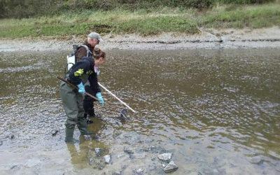 Un enregistreur biologique pour évaluer la qualité des estuaires