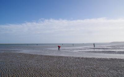 Confinement. Peu de pêcheurs à pied à l'occasion des dernières grandes marées.