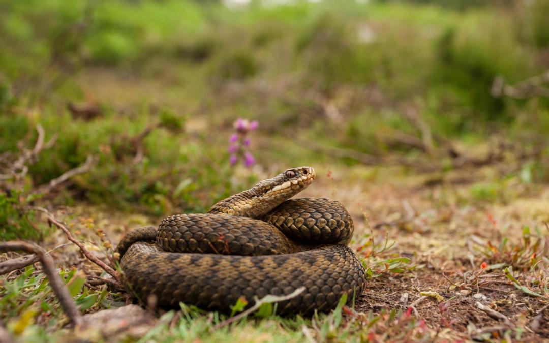 Publication du nouvel arrêté de protection des amphibiens et reptiles
