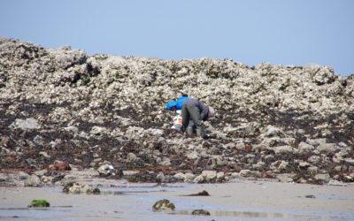 Grandes marées d'avril. 106 pêcheurs à pied sensibilisés