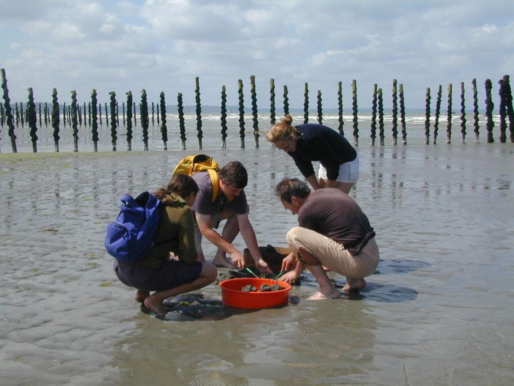 Évaluation du gisement de bivalves en baie de St-Brieuc