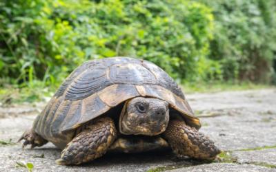 Signalons nos observations de reptiles exotiques