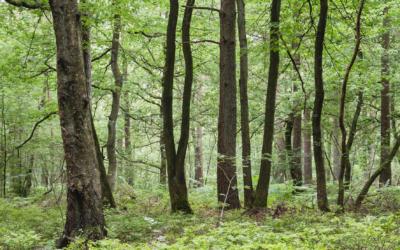 Création d'un groupe de réflexion «arbre et forêt»