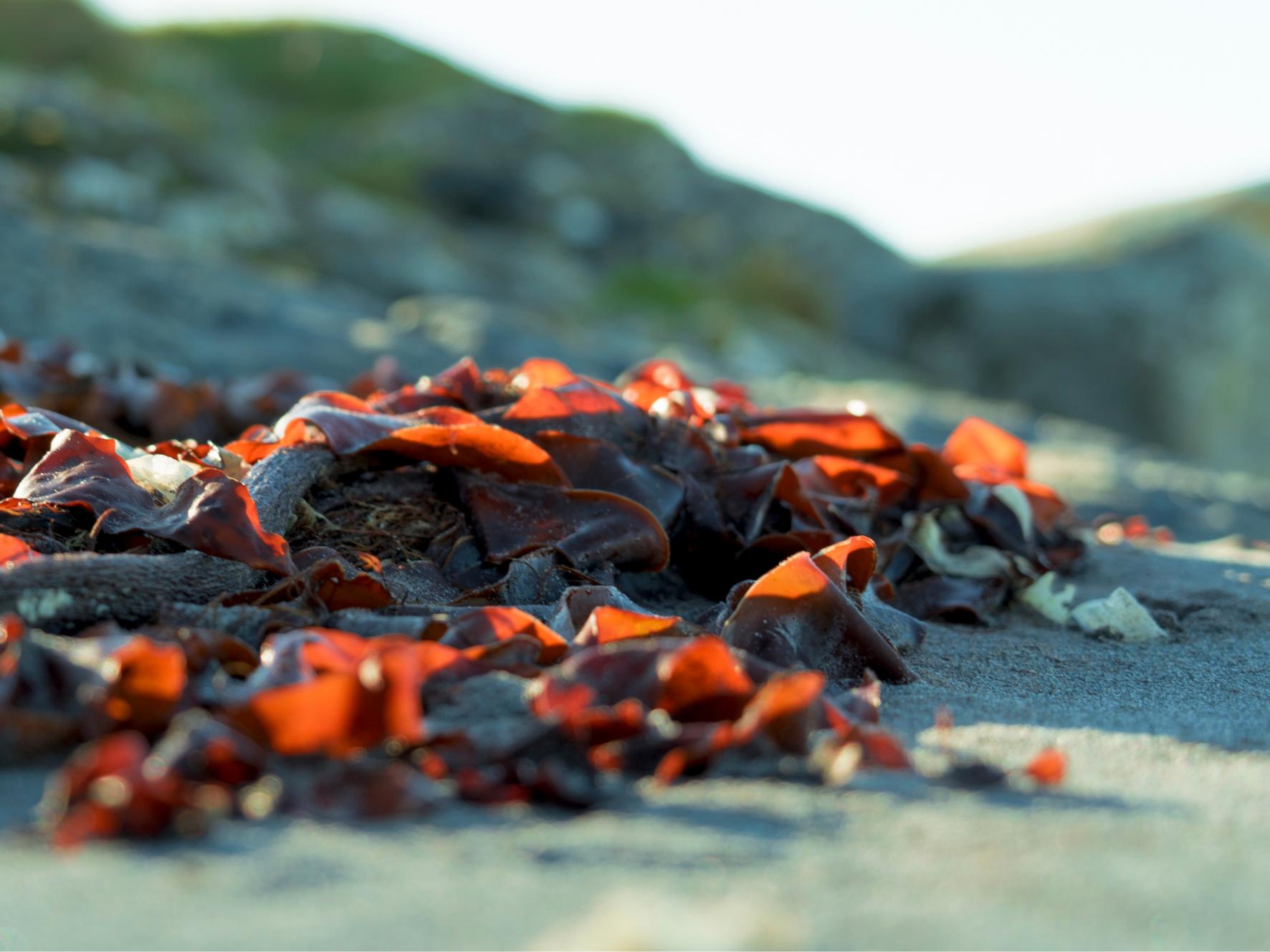 Université de la Nature : découverte des algues et du protocole ALAMER